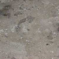 Fossil Limestone Grey Polished Tiles